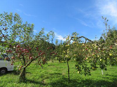 りんごと青空