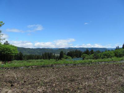 田んぼからの景色