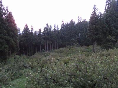 夕方のりんご畑