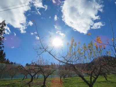 りんご畑の上の空