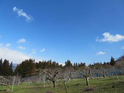 りんご畑から